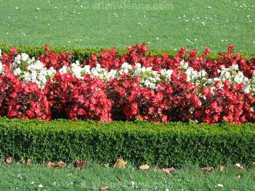 Austrian Flag Formed by Flowers in Schönbrunn Gardens