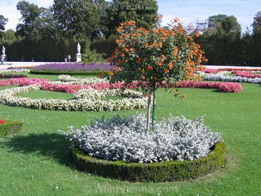 Flowers in Schönbrunn Gardens, Vienna